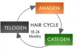 About Haircycle